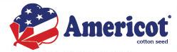 americot